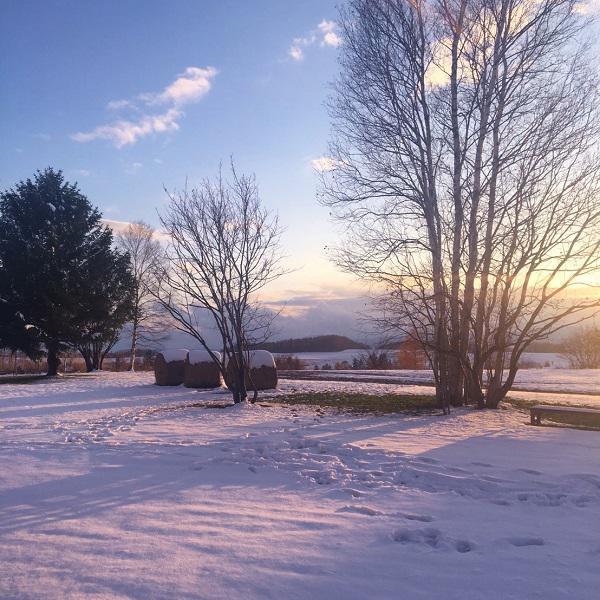 雪一面!フェルム ラ・テール美瑛の風景